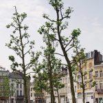 """West 8, ein """"Wohnzimmer"""": Falconplein, Antwerpen 2007, Foto: Van den Berk Boomkwekerijen"""